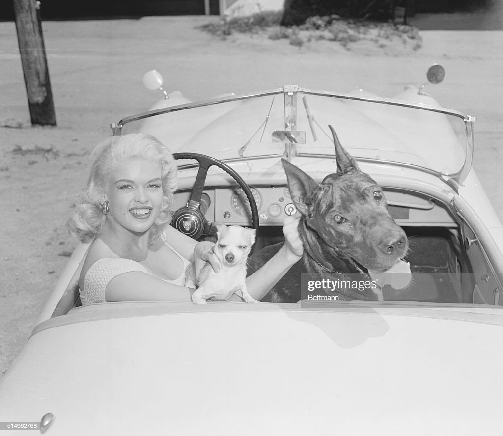 jayne mansfield in car with her dogs pictures | getty images