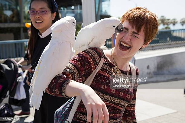 Visiting college student Sara Kipin of Pittsburgh gets an affectionate peck from a cockatoo while visiting Palisades Park at the Santa Monica Pier...