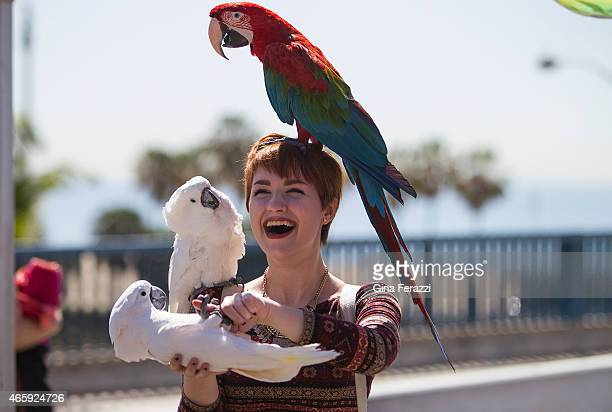 Visiting college student Sara Kipin of Pittsburgh has fun with a red parrot on her head and two white cockatoos while visiting Palisades Park at the...