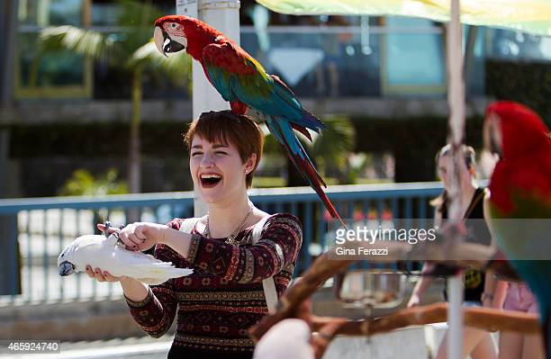 Visiting college student Sara Kipin of Pittsburgh has fun with a red parrot on her head and a cockatoo in her grips while visiting Palisades Park at...