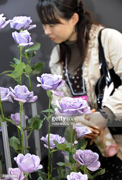 A visitor admires cut flowers of blue roses at the International Flower Expo in Chiba city suburban Tokyo on November 1 2008 Japanese beverage...
