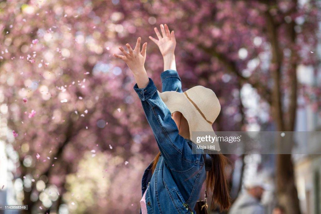 DEU: Cherry Blossoms Bloom In Bonn