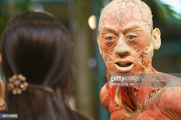A visitor gazes at a preserved fullbody plastinate at the 'Mysteries of the Human Body' exhibition on June 24 2005 in Seoul South Korea The...