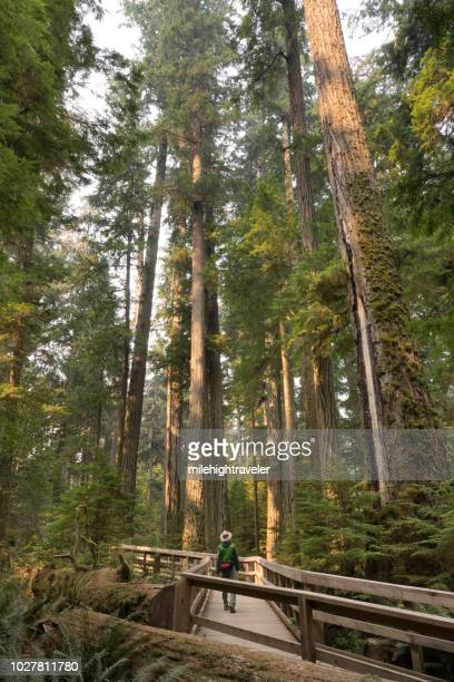 Visitor hikes Cathedral Grove ancient coastal forest MacMillan Provincial Park Vancouver Island British Columbia
