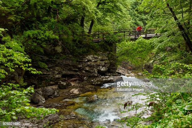 Visitor in red on bridge over the noisy Sum waterfall in the green Spring forest at the end of Vintgar Gorge on the Radovna River Slovenia