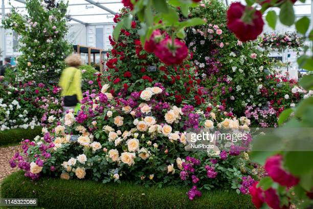 A visitor in Royal Hospital Chelsea gardens as the RHS Chelsea Flower Show opens in London England on May 20 2019