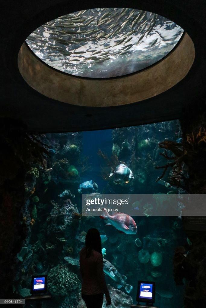 Day Event Of The Shedd Aquarium