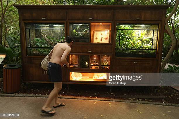 A visitor looks at a display of tropical insects and spiders at the Tropical Islands indoor resort on February 15 2013 in Krausnick Germany Located...