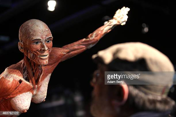 A visitor looks at a plastinated corpse on the opening day of the Bodyworlds exhibition in the Menschen Museum on February 18 2015 in Berlin Germany...