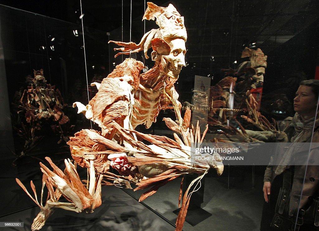 A visitor looks at a plastinated mythical creature sculpture during the exhibition 'Koerperwelten - eine Herzenssache' (Body worlds - a heart issue) by German 'plastinator' Gunther von Hagens on April 23, 2010 in Bremen, northern Germany.
