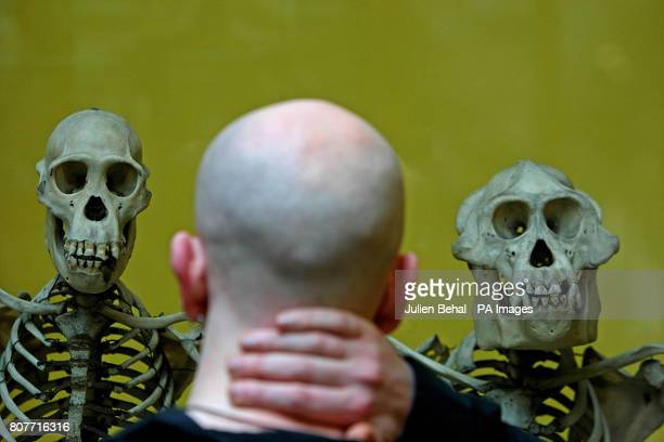 A visitor looks at an exhibit on the evolution of man as Minister for Social and Family affairs Mary Hanafin officially opened the refurbished...