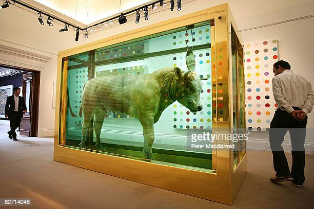 Visitor looks at Damien Hirst's 'The Golden Calf' at Sotheby's auction 'Beautiful Inside My Head Forever' on September 8, 2008 in London, England....