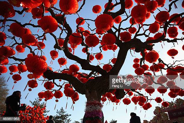 Visitor passes the trees decorated with red lanterns at the Spring Festival Temple Fair for celebrating Chinese Lunar New Year of Horse at the Temple...