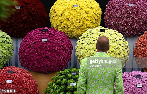 A visitor poses for a photograph next to chrysanthemums on the press preview day of the Chelsea Flower Show on May 18 2015 in London England The show...