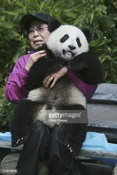 A visitor poses for pictures with a giant panda cub at the China Giant Panda Protection and Research Centre home to about 80 artificially bred pandas...