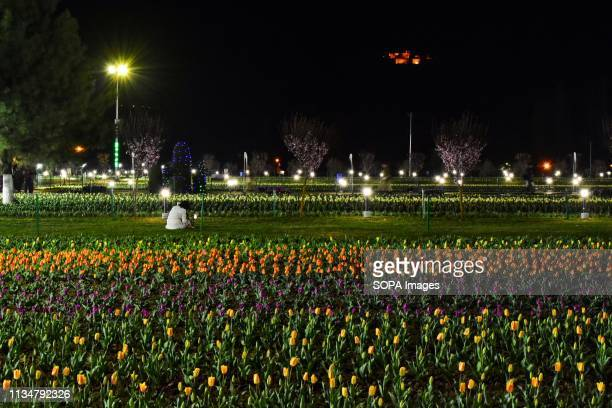 Visitor seen relaxing near the tulip flowers inside the Asia's largest Tulip Garden in Srinagar. The Asia's largest tulip garden with 20 lakh tulips...