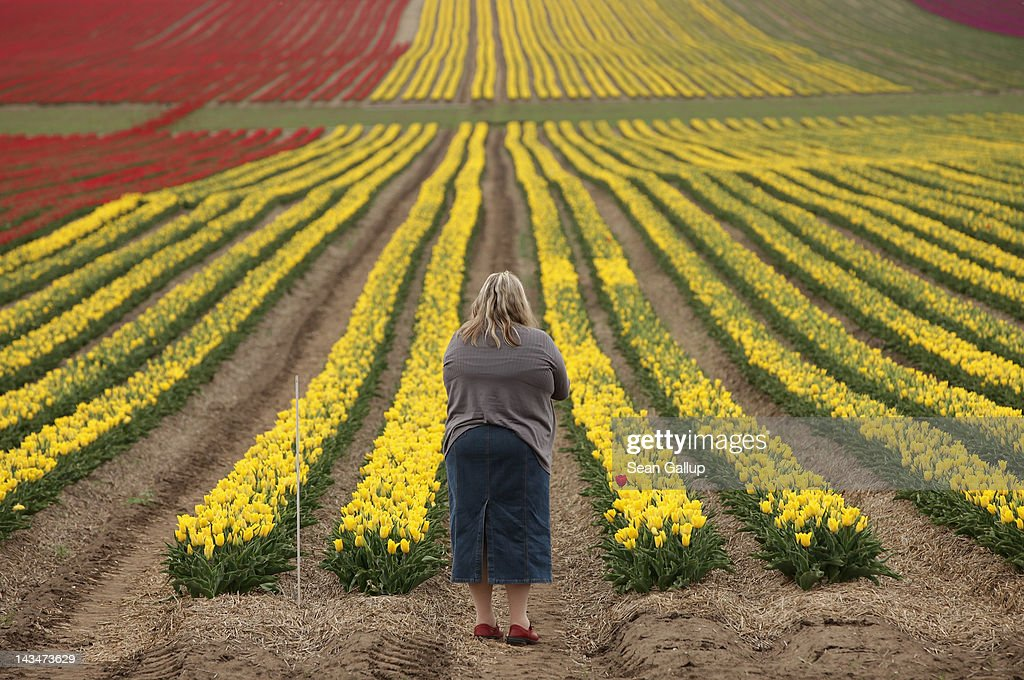 A visitor stops to look out at a tulip field on April 27, 2012 near Schwaneberg, Germany. Spring weather is finally taking hold in Germany with temperatures expected to reach 28 degrees Celsius by the weekend.