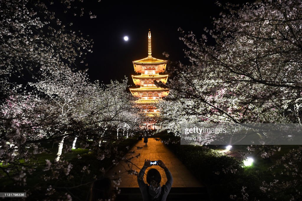 The Night Of Cherry Blossoms At Wuhan : News Photo