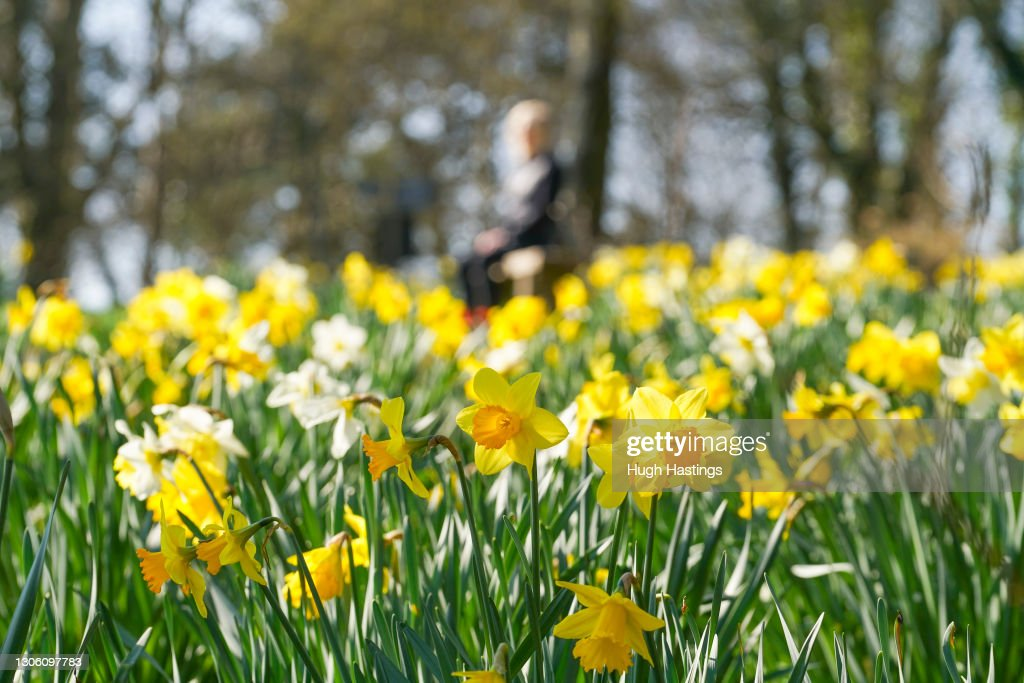 Spring Comes To The Lost Gardens of Heligan As End Of Lockdown Nears : News Photo