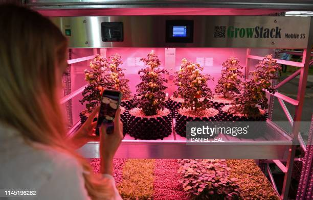 A visitor takes a picture of vegetables growing under artificial light on a Grow Stack vertical farm in the IKEA Gardening will save the World garden...
