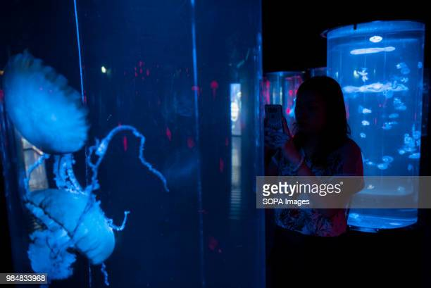 Visitor takes pictures of Pacific Sea Nettle at Hong Kong's Ocean Park amusement and animal theme park. Ocean Park, is a marine mammal park,...