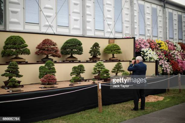 A visitor takes pictures of varieties of bonsai trees on display at the Chelsea Flower Show on May 22 2017 in London England The prestigious Chelsea...