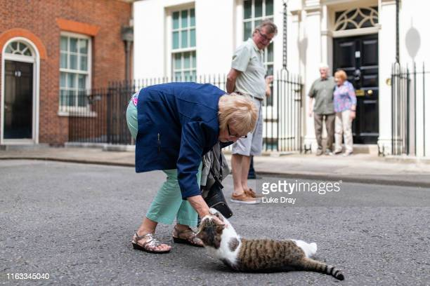 Visitor to Downing Street is scratched as she strokes Larry, the resident Number 10 Cat, on July 21, 2019 in London, England.