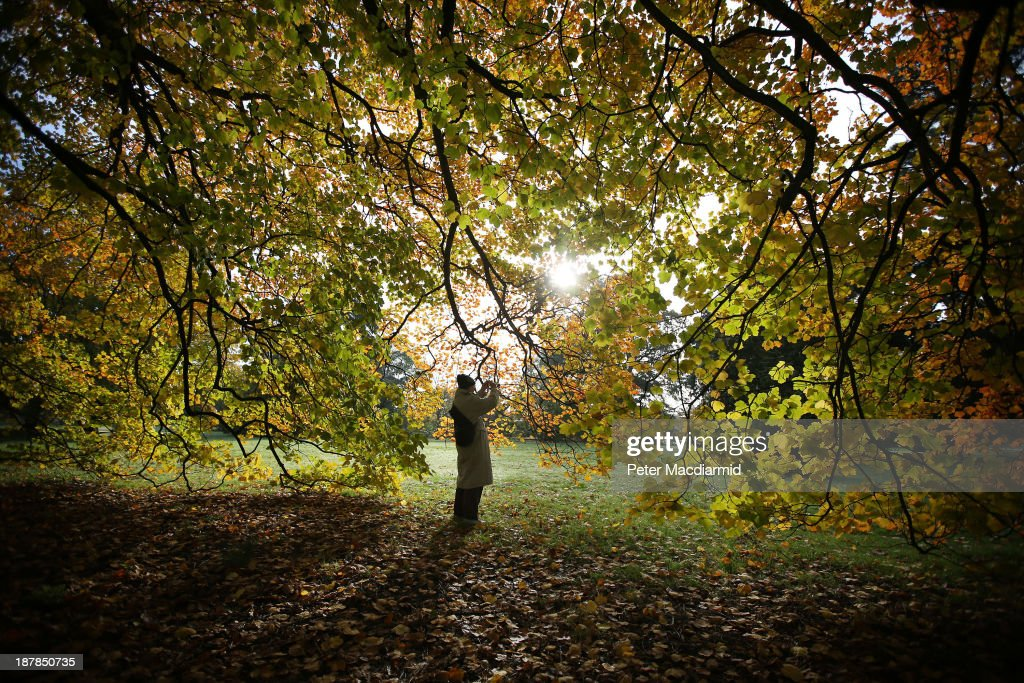 A visitor to the Royal Botanic Gardens, Kew takes a close-up photograph of a tree on November 13, 2013 in London, England. Autumn's colours are showing later in the season this year due to a record cold spring.
