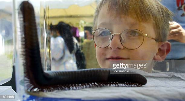 A visitor to the third annual Big Bug Out at Miami Metrozoo checks out a millipede May 5 2001 in Miami Florida The event was an opportunity to learn...