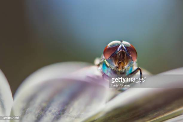 visitor to the third earth - arthropod stock pictures, royalty-free photos & images