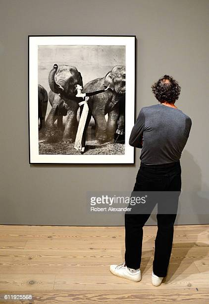 A visitor to the Whitney Museum of Art in New York City views photographer Richard Avedon's 1955 photograph 'Dovima with Elephants' The museum in...