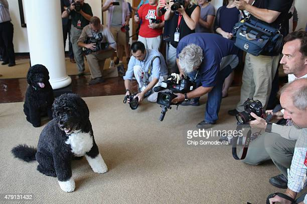 Visitors and journalists make photographs of the first family's dogs Bo and Sunny on the first day that photograph is allowed during White House...