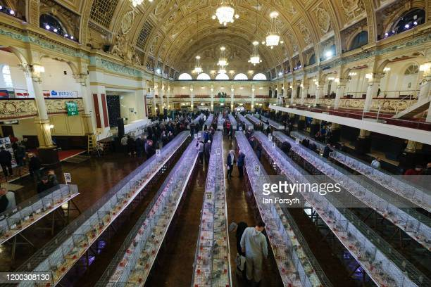 Visitors and pigeon enthusiasts attend the first day of the annual British Homing Pigeon World Show of the Year at Blackpool Winter Gardens on...
