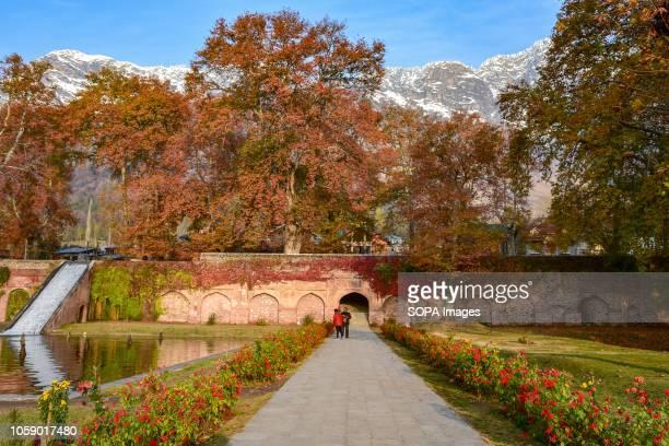 SRINAGAR JAMMU KASHMIR INDIA Visitors are seen walking under maple trees during the autumn season Kashmir has been divided between India and Pakistan...