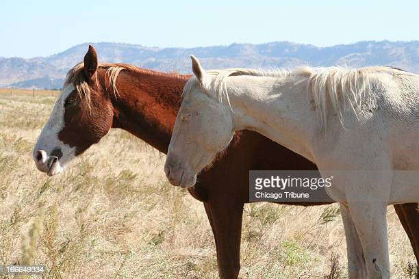 Visitors can get up close to wild horses at the Black Hills Wild Horse Sanctuary in Hot Springs South Dakota