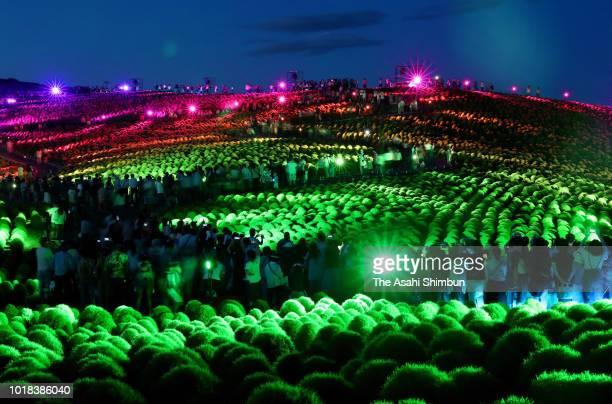 Visitors enjoy illumination at Kochia field at Hitachinaka Kaihin Park on August 17 2018 in Hitachinaka Ibaraki Japan