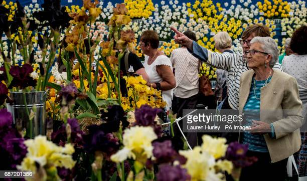 Visitors enjoy the flowers at the RHS Chelsea Flower Show at the Royal Hospital Chelsea London
