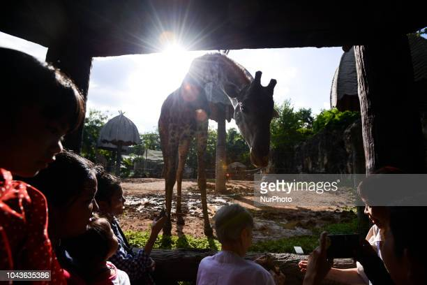 A Visitors feed a giraffe at Dusit Zoo in Bangkok Thailand 30 September 2018 Dusit Zoo is Thailand's first public zoo opened 80 years ago on 18 March...