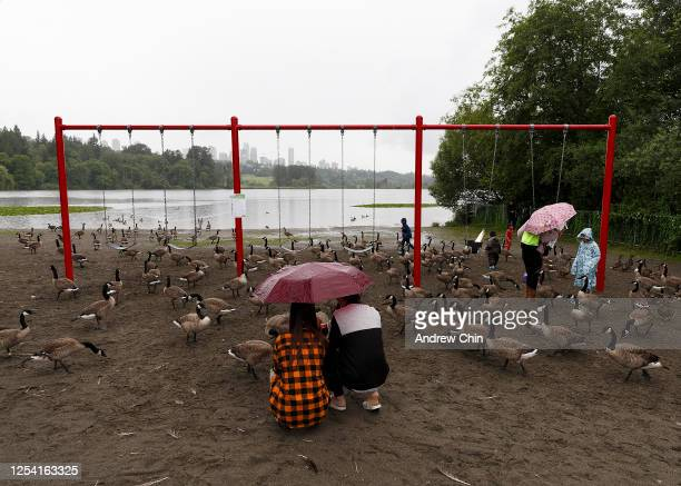 Visitors feed a group of Canadian geese on a rainy day at Deer Lake Park on July 03, 2020 in Burnaby, British Columbia, Canada. The Government of...