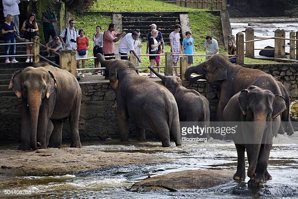 Visitors feed elephants at the Pinnawala Elephant Orphanage established by the Sri Lanka Department of Wildlife Conservation in Pinnawala village...
