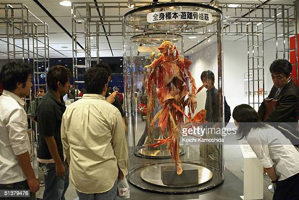 Visitors gaze at a preserved plastomic of an entire human body at the Mysteries of the Human Body exhibition which displays some 170 specimens on...