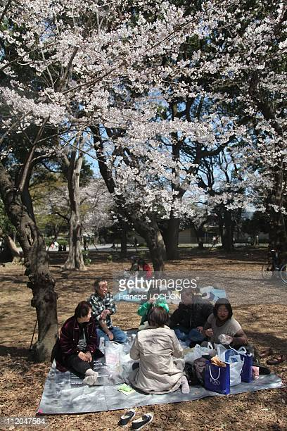 Visitors have a picnic at the Sad Spring Festivities at Ueno Park on April 5 2011 in TokyoJapan