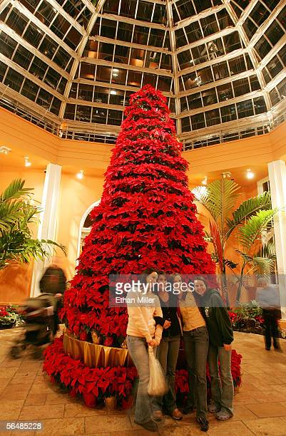 Visitors have their photos taken in front of a 20foot tall Christmas tree made out of Poinsettias at City Park's Celebration in the Oaks in the...