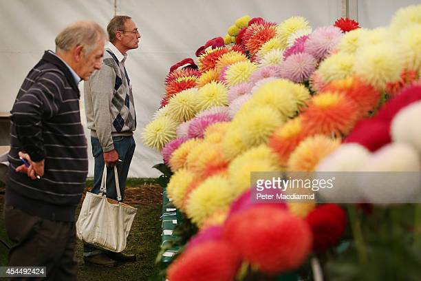 Visitors look at a display of Dahlias at the Royal Horticultural Society Flower Show at Wisley Gardens on September 2, 2014 in Wisley, England....