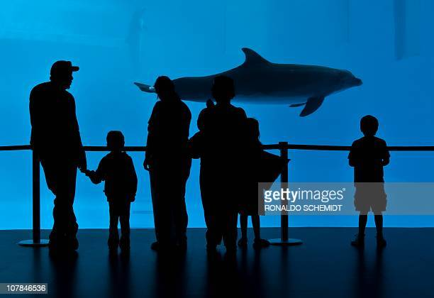 Visitors look at a dolphin through a window on December 18 at the the Aquarium in Veracruz Mexico AFP PHOTO/Ronaldo Schemidt