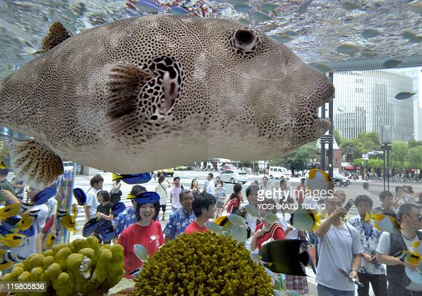 Visitors look at a large fish in a fish tank displayed in the window of Sony's headquarters in Tokyo's Ginza fashion district on July 18 2011 Some...