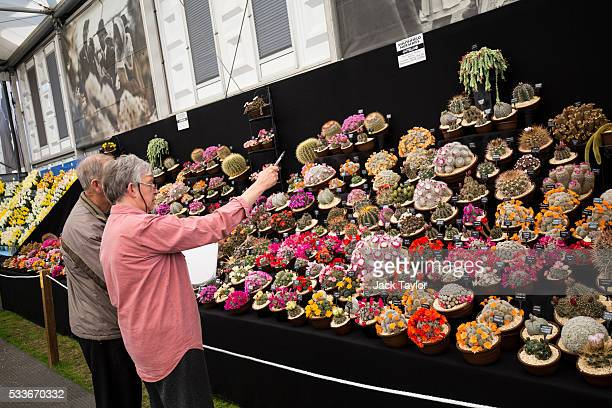 Visitors look at an assortment of cacti at the Chelsea Flower Show on May 23 2016 in London England The prestigious flower show held annually since...