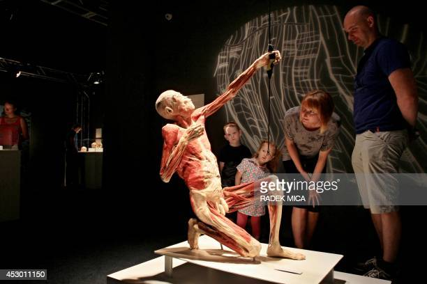 Visitors look at an exhibit at the show Bodies Revealed after it opened on August 1 2014 in Brno Czech Republic The exhibition presenting human...