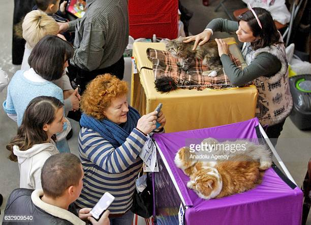 Visitors look at cats during the International Cat Show in Kiev, Ukraine, on January 28, 2017.The show presents more than 20 breeds of cats,...