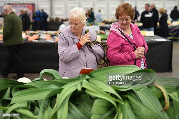 Visitors look at large leeks entered in the 'Giant Vegetable Competition' at the Harrogate Autumn Flower Show in northern England on September 18...